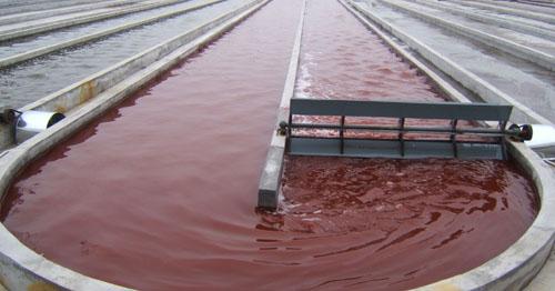 养殖雨生红球藻((天然虾千赢国际网页)的生产过程:室外红色积累虾千赢国际网页阶段